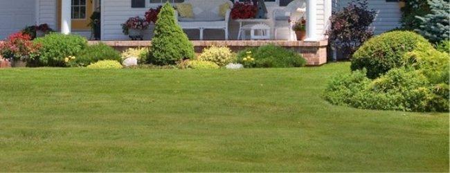Donovan Lawn Care